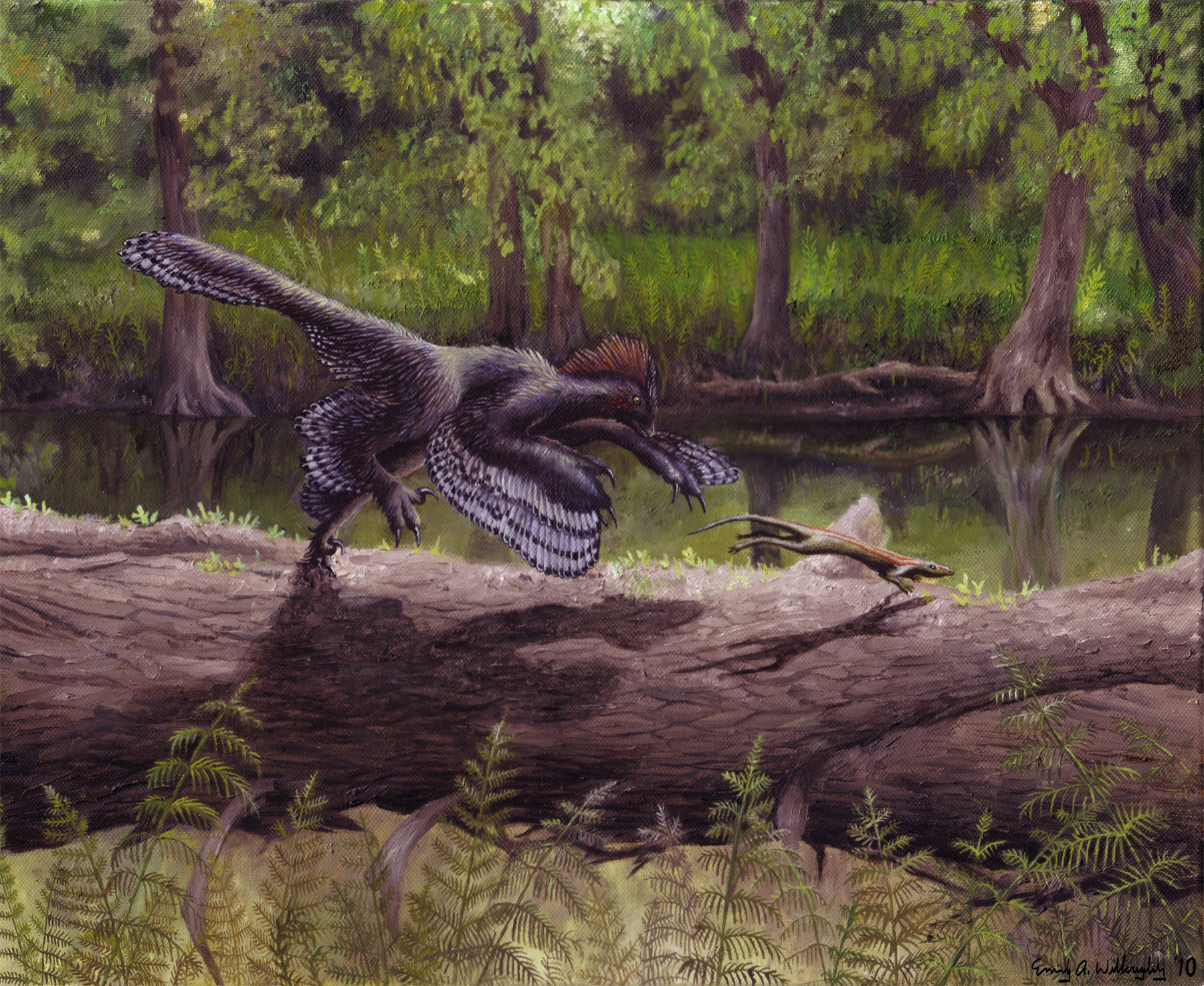 Anchiornis anchiornis – emily willoughby art