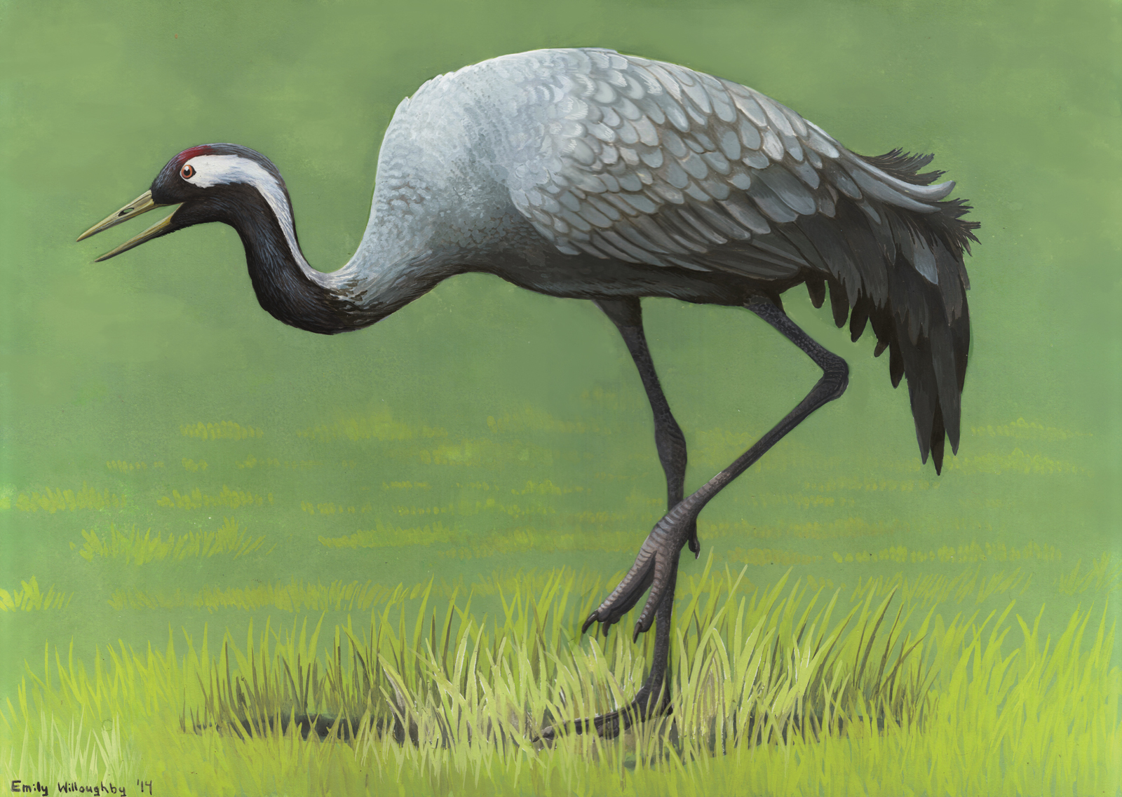 mon Crane – Emily Willoughby Art