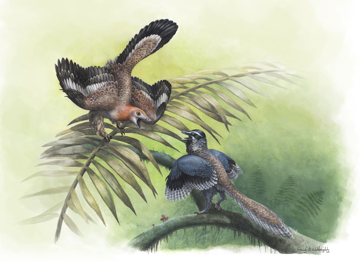 The Earliest Birds
