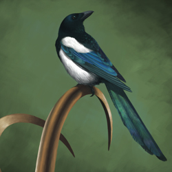 Low-key Magpie