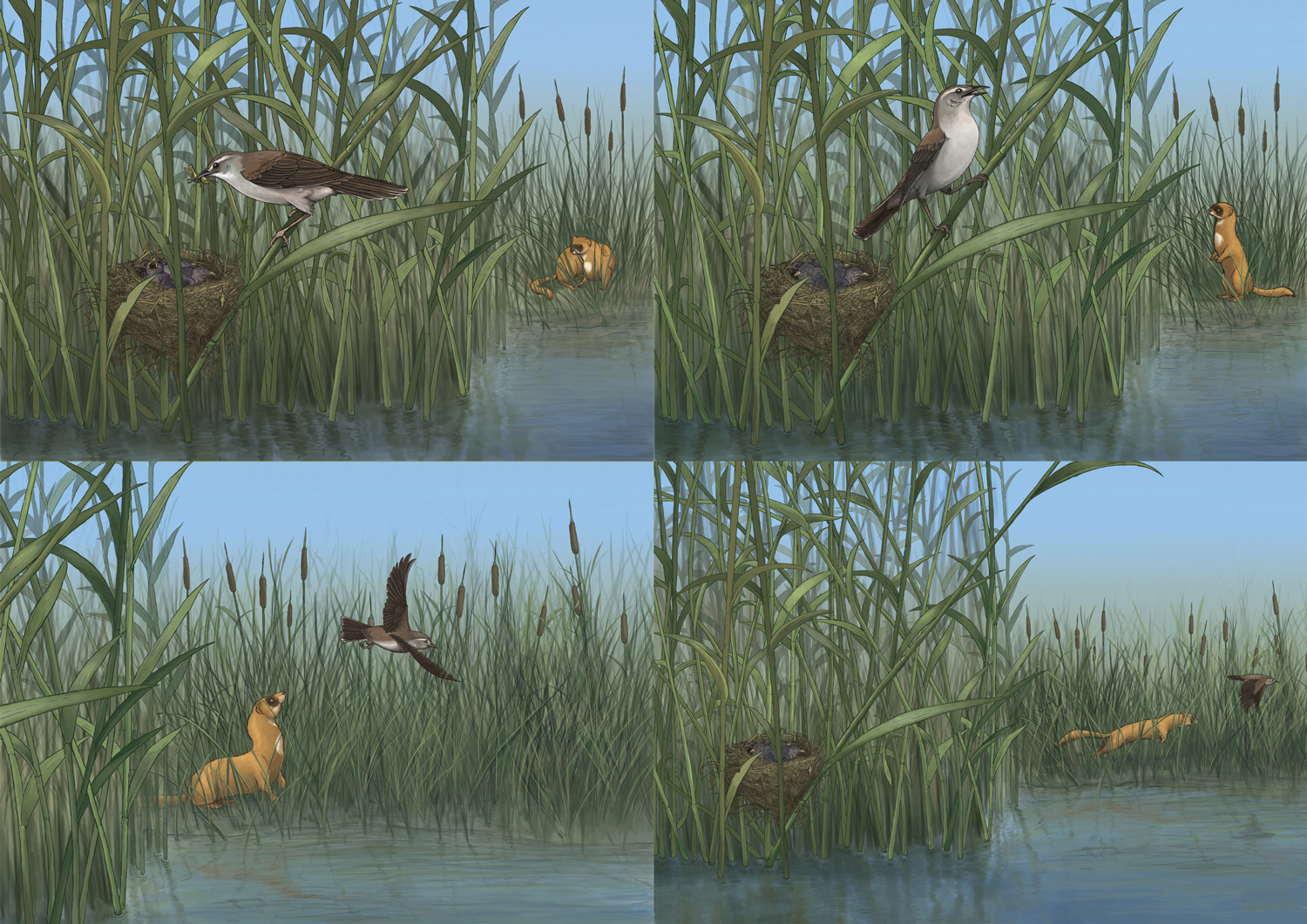 Warbler Decoy Sequence