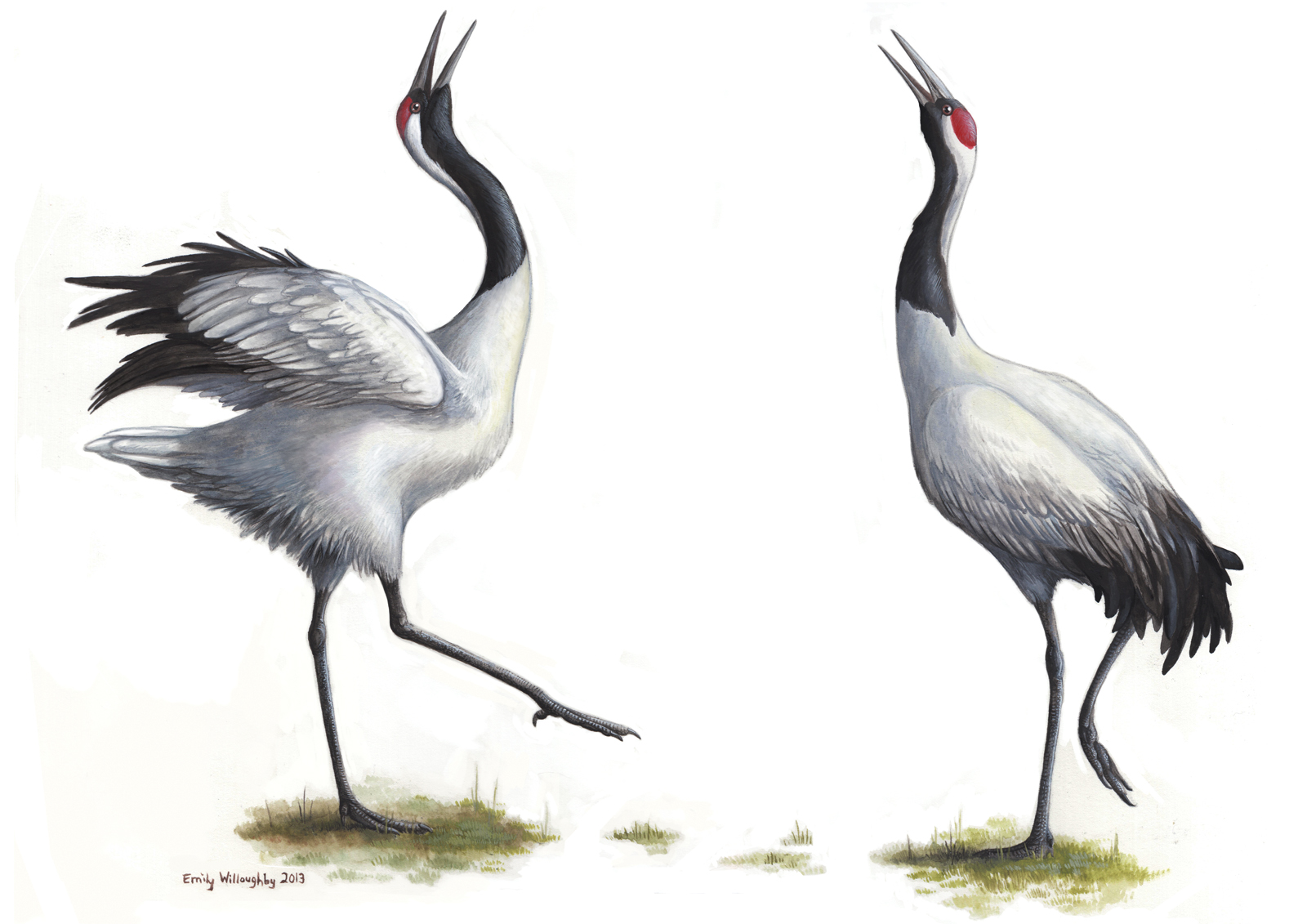 dancing red crowned cranes emily willoughby art
