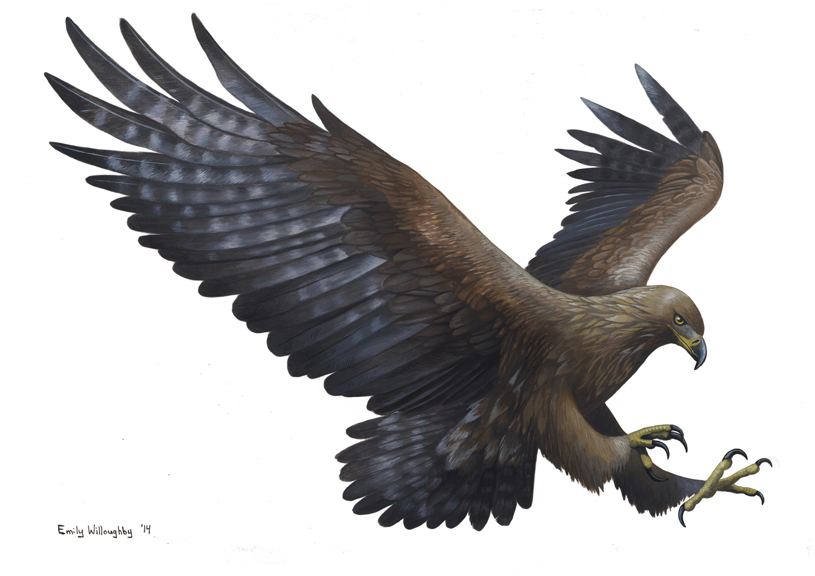 Golden Eagle Mk. II – Emily Willoughby Art