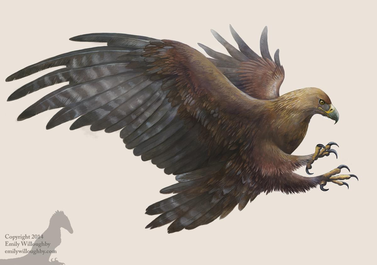 golden eagle  u2013 emily willoughby art
