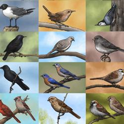 Bird Panoply