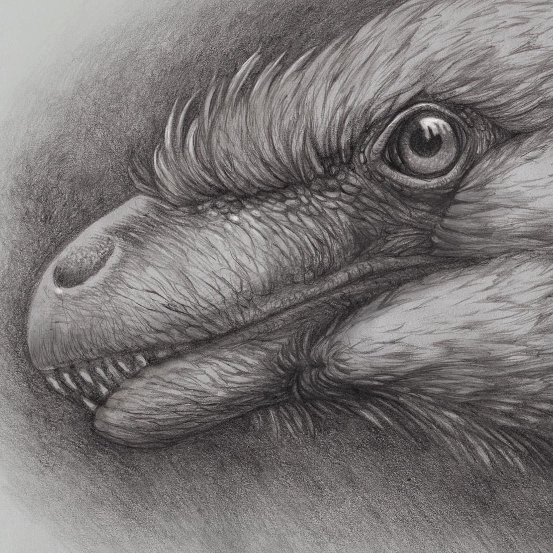 Utahraptor portrait